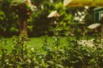 9 Reasons Why You Need to Hire a Professional Landscaping Service