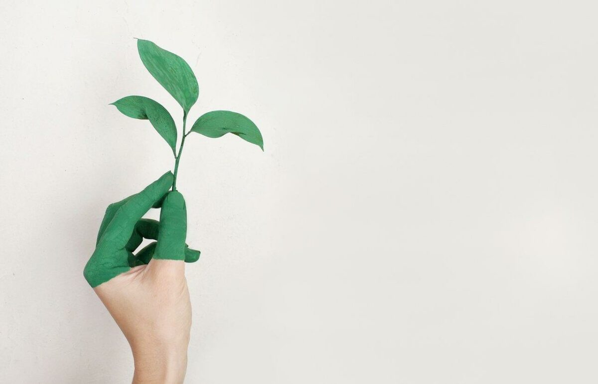 How to Write an Attractive Description of Environmentally-Friendly Products?